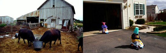 Buckets take on very different meanings in this diptych of life on the farm and on the subdivision that replaced it. Image 2014 © Scott Strazzante, from Common Ground, PSG Books