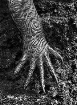 Iguana hand, from Genesis. Image (c) Sebastiao Salgado.